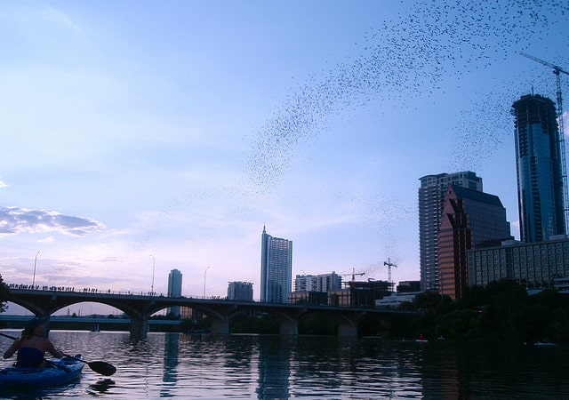 Bats flying out from under the Congress Street Bridge in Austin, Texas.