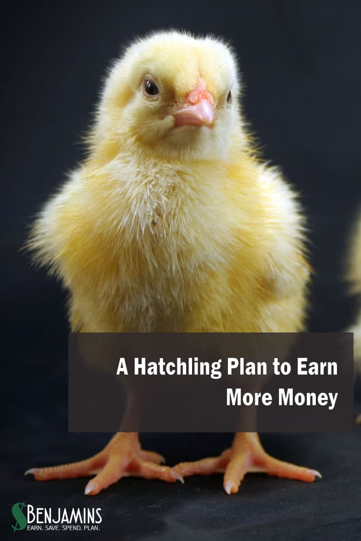 A Hatchling Plan to Earn More Money